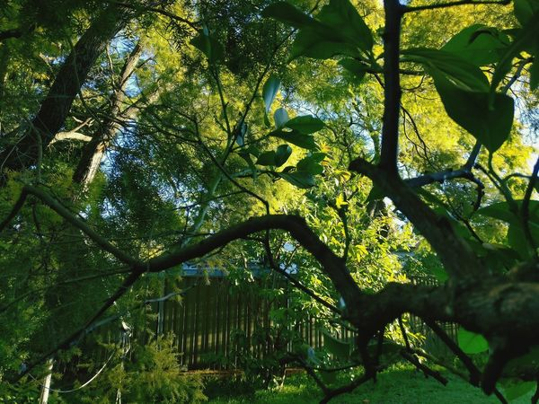 Nature overload Backyard Garden Shot Of Tree View Backyard Sydney