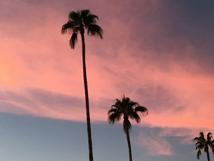 silhouette of three desert palm trees against romantic sky at sunset