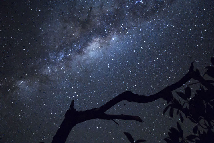 Low angle view of silhouette tree against sky at night