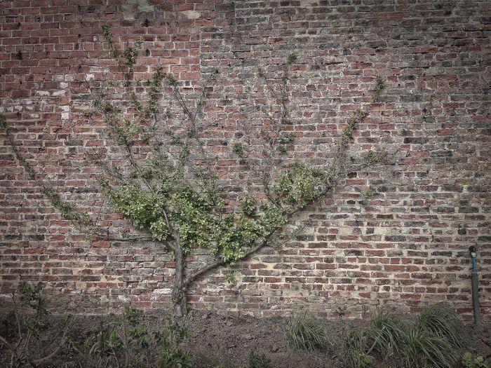 Brick Wall No