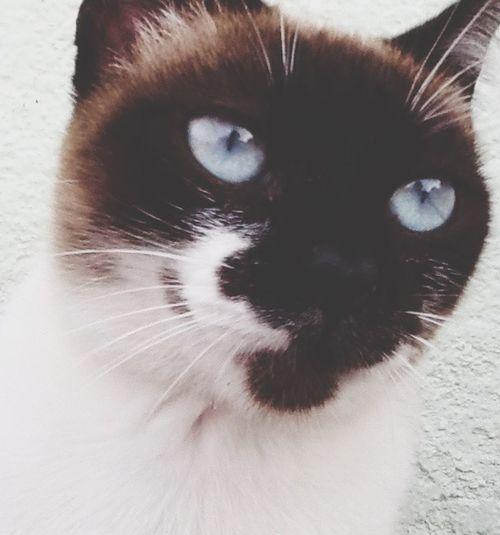 Nova membro na família Menezes, Adotada, porque sim. De jeito nenhum eu compraria um gato, sendo que tem tantos na rua, precisando de um dono ;) Cat♡