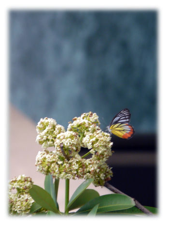 8Mpx One butterfly fully colored on a plant by an exotic day. Colored Butterfly Colored Wings Wings Colored One Butterfly Plant Beauty In Nature Invertebrate Insect Animal Wing Day Butterfly - Insect Twice Colors Background White Frame Colored Photography Focused