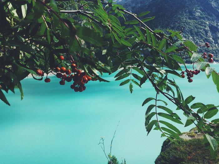 Vscocam Vscogood Nature Italia Italy Water Acqua Wonderful Place Barrage Diga