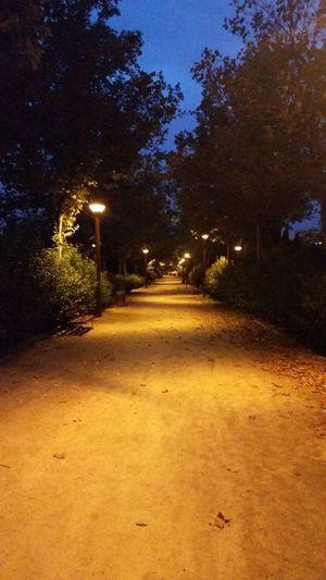 Night Garden No
