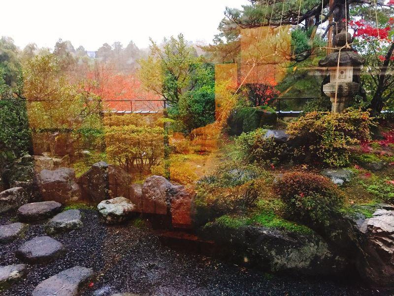 Fukui Fukui Prefecture Beauty In Nature Autumn Nature Plant Hotel