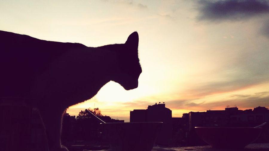 Cat Landscape Andez Sunset Bogotá