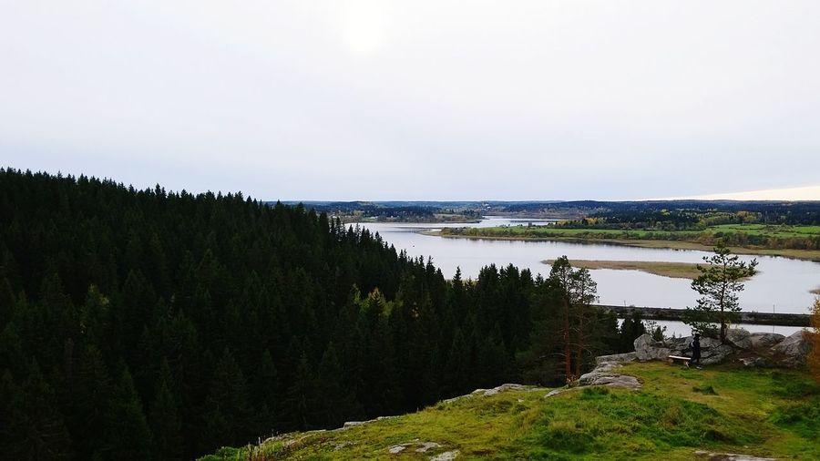 Karelia you are beautiful Tree Coniferous Trees Forest Water Lake Sky Landscape Idyllic Woods