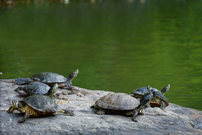 Team Turtle