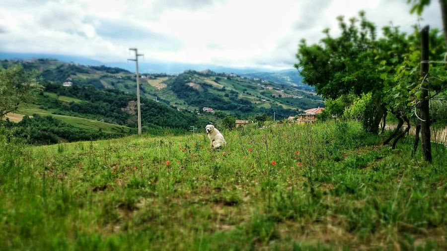 Passeggiando col mio cane.. Dog Dog Walking Nature EyeEm Nature Lover In My Place Spring Time Country Life Nature_perfection Landscape Landscape_photography