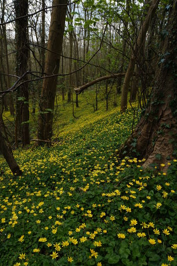 Beauty In Nature Branch Celendines Day Flower Forest Growth Landscape Nature No People Outdoors Scenics Tranquil Scene Tranquility Travel Destinations Tree Yellow
