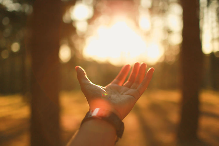 Autumn Mood Human Body Part Human Hand Hand Body Part One Person Focus On Foreground Sunlight Nature Real People Finger Human Finger Personal Perspective Leisure Activity Lifestyles Unrecognizable Person Outdoors Reaching Close-up Tree Lens Flare Human Limb Hand Raised