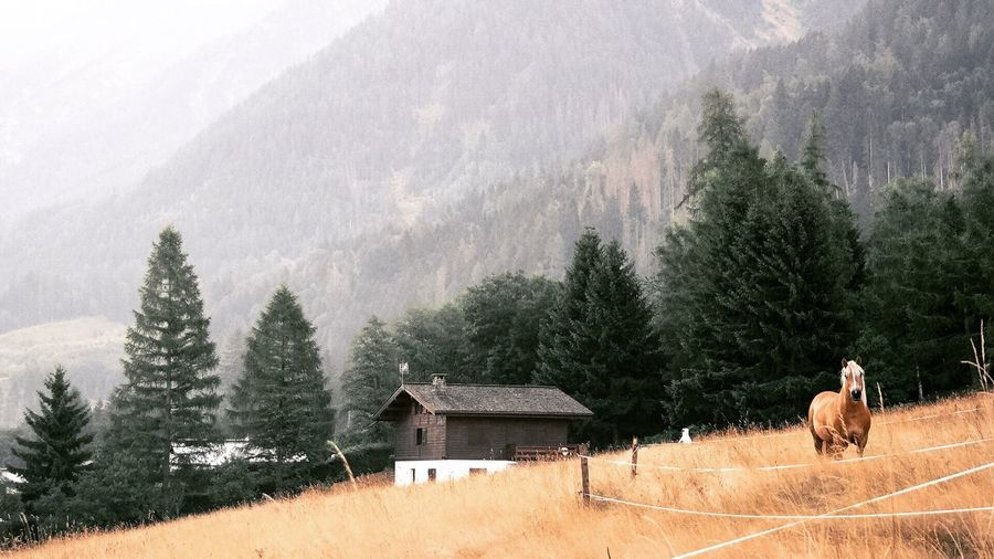 Panoramic view of house against trees