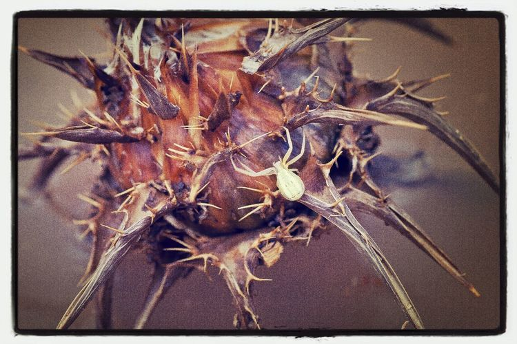 Close-up of dead plant