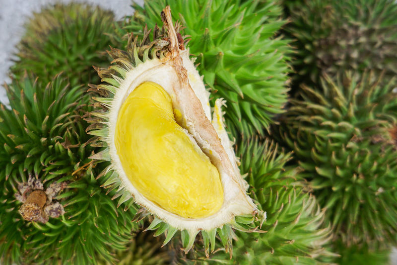 jungle Durian native to Borneo called Durian Sukang Durian Healthy Eating Sweet Food Fruits And Vegetables Tropical Fruits Durian Fruit Malaysian Food Fruits Market Fruits Stall Spikey Exotic Fruits Durio Durian Tree Thailand Durian Season Durianlovers Strong Smell Dalit Fruits Durians Close-up Green Color Plant
