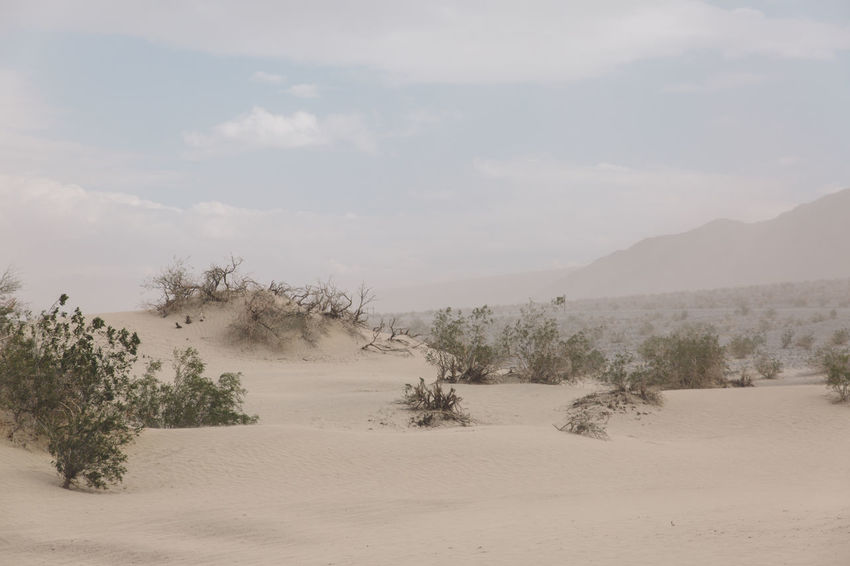 Arid Climate Arid Landscape Beauty In Nature Day Death Valley Death Valley National Park Desert Desert Dunes Landscape Nature No People Outdoors Sand Sand Dune Sand Storm Scenics Sky Storm Tranquil Scene Tranquility Tree