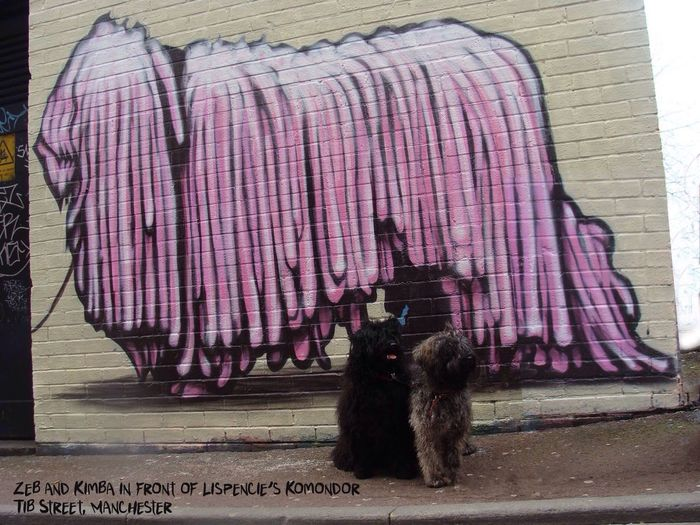 Writing On The Walls Komondor  Hungarianpuli Our 2 Pulik, Zebedee and Kimba pose next to their working partner Tib Street Graffiti Puli Dog Streetphotography