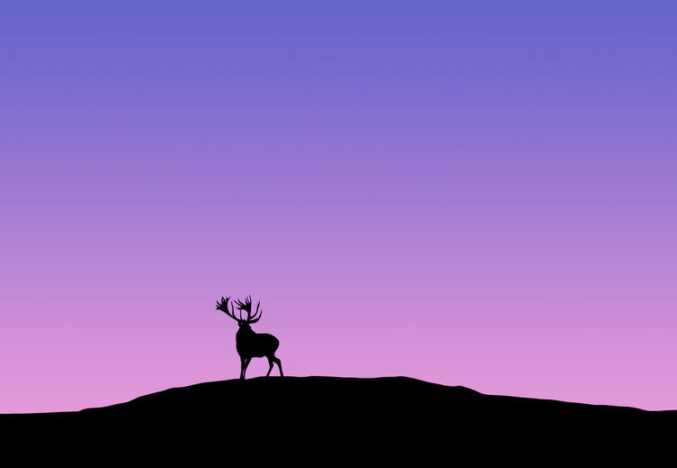 Control Adventure Animals Carefree Clear Sky Copy Space Deer Desert Escapism Fog Getting Away From It All Graduation Horizon Over Land Landscape Light Nature Non-urban Scene Outdoors Recreational Pursuit Remote Scenics Silhouette Silhouette Sky Tranquil Scene Tranquility