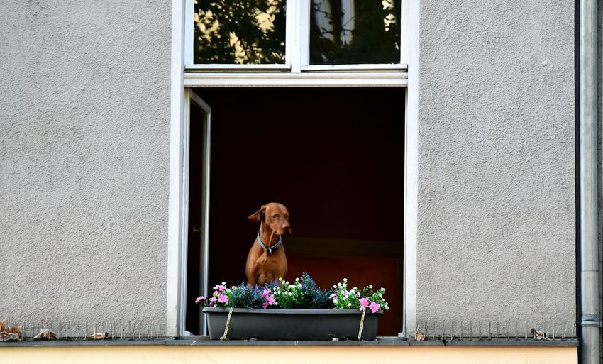 View of dog looking through window