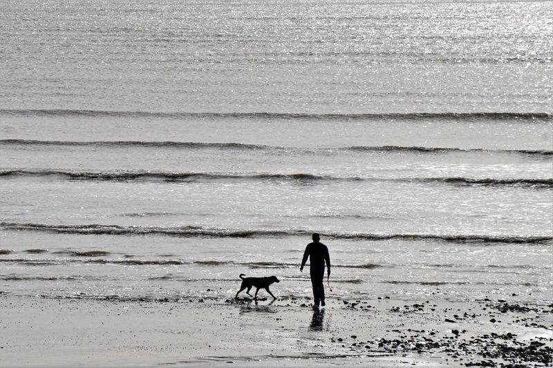 Man walking with dog on beach