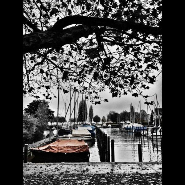 Autumn Lake Constance Bodensee switzerland schweiz horn water PhotoSplash InstaSplash colorsplurge PicCells