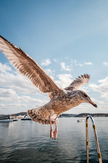 Seagull flying over sea against sky during sunny day