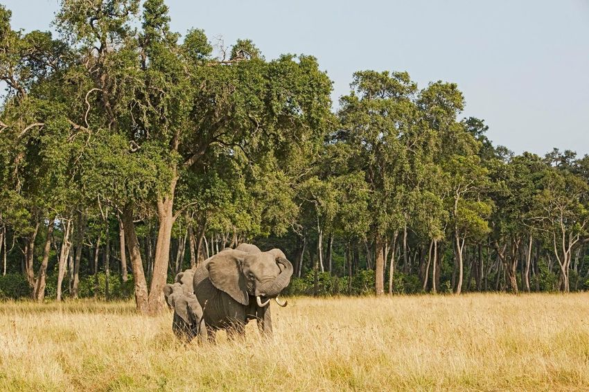 Good morning guys @dudla Nature Travel Travel Photography Landscape Wildlife Elephants