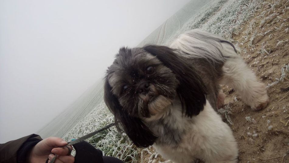 D5/ I wanna do big things and be happy. One Animal Dog Human Hand Shih Tzu Outside Outdoors
