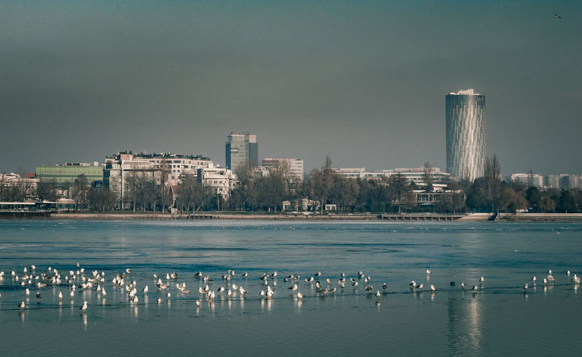 Architecture Bird Birds Built Structure Business Finance And Industry City Cityscape Day Frozen Frozen Lake Lake Landscape Landscape_Collection Nature Seagull Seagulls Sky Skyscraper Urban Urban Skyline Water