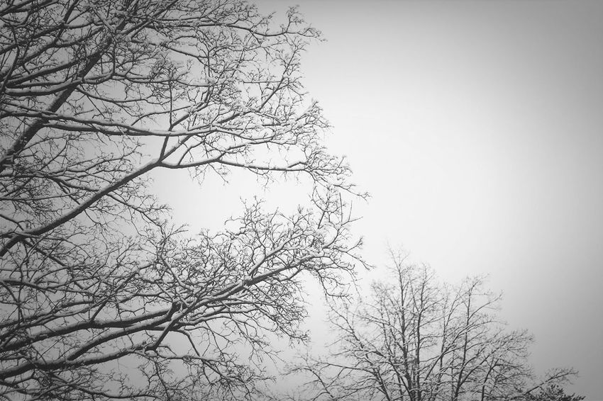 Snow Winter Trees Branches