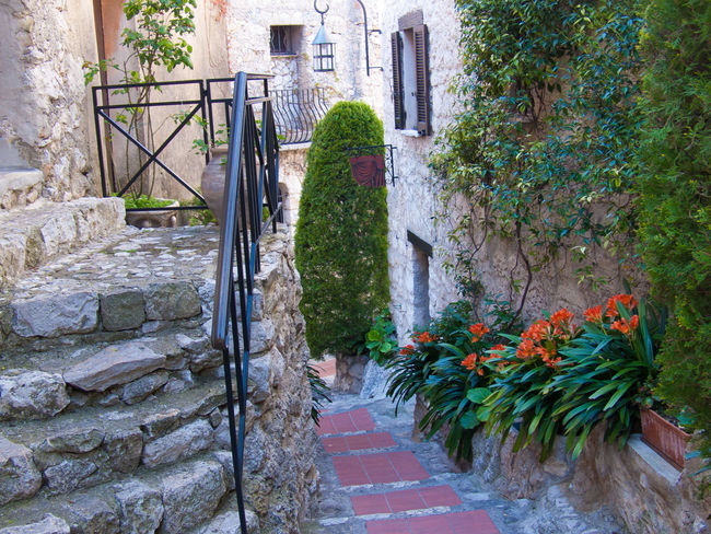 eze,alpes maritimes,franche Architecture Botany Building Exterior Built Structure Day Entrance Flower Fragility Freshness Growth Narrow No People Outdoors Plant Plant Life Staircase Stairs Steps The Way Forward