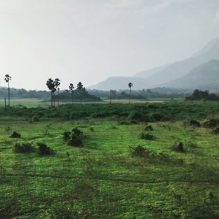 Serene Kerala India Nature Landscape Green Mountains TheNilgiris Palakkad Palmtrees Travel Photography