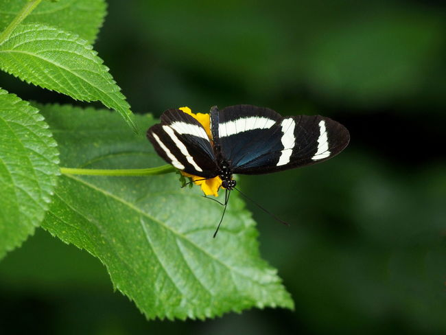 Animal Animal Themes Animal Wildlife Animal Wing Animals In The Wild Beauty In Nature Butterfly - Insect Close-up Day Flower Green Color Growth Insect Invertebrate Leaf Nature No People One Animal Outdoors Plant Plant Part