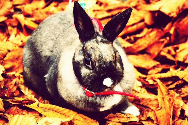 My Pet Rabbit A Walk In The Park That's My Rabbit