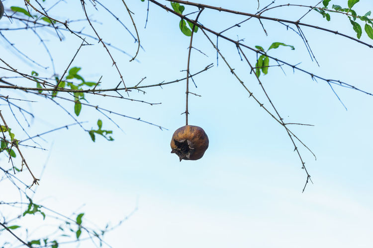 Low angle view of snail on tree against sky