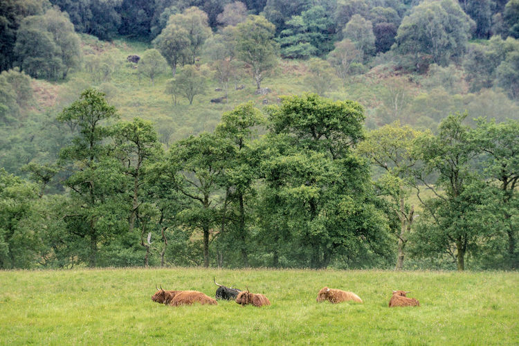 Cows grazing on landscape