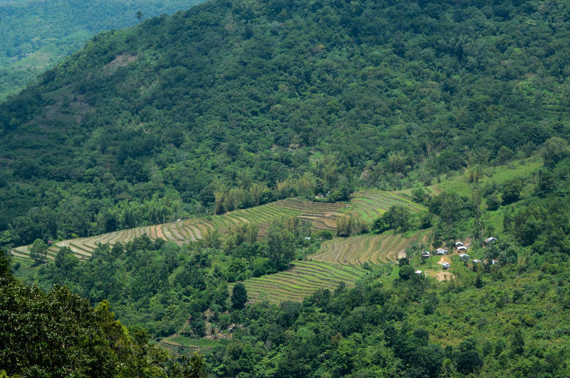 Rice Terraces of Don Salvador Benedicto, Negros Occidental, Phillippines Agriculture Don Salvador Benedicto Field Green Rice Rice Paddy Rice Terraces. Philippines Agriculture Photography Contour Cultivated Cultivated Land Farming Food Landscape Man Made Beauty Mountain Negros Occidental Outdoor Photography Rice Field