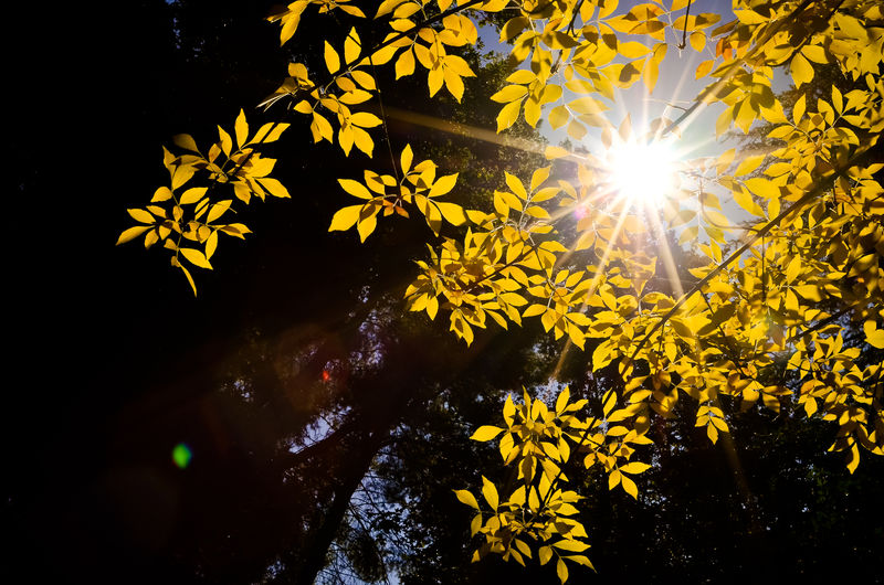 Penetration. Peek Sun Star Sunlight Beauty In Nature Close-up Day Flower Freshness Growth Nature No People Outdoors Peekaboo Plant Sun Sunlight Tranquility Tree Water Yellow