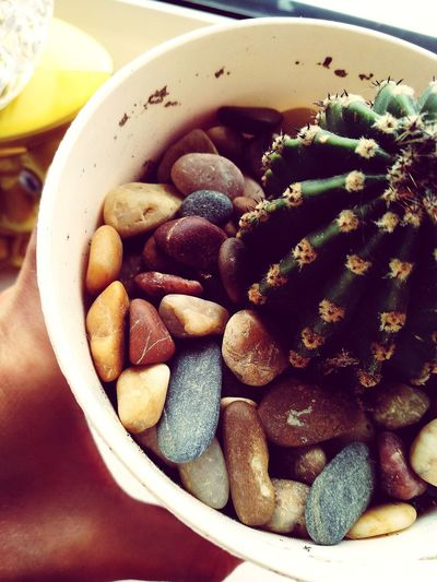 Plant Stones And Flowers The Details Cactus Bowl Close-up Food And Drink EyeEmNewHere