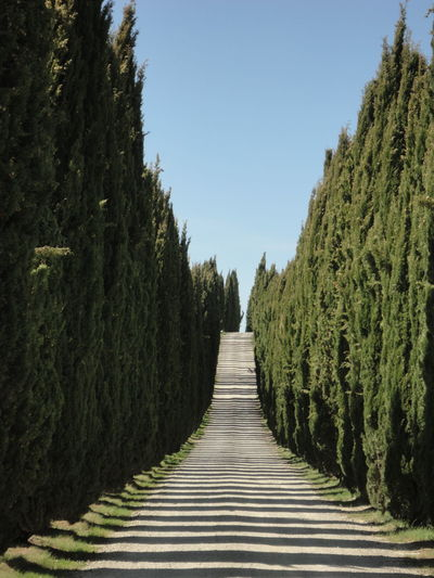 Cipressi Countryside Cypress Cypress Trees  Diminishing Perspective Geometry Nature Geometry Road Trip Shadows Shadows & Lights Symmetrical Symmetry Toscana Tree Silhouette Treelined Tuscany Tuscany Countryside