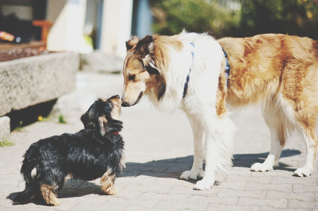 domestic animals, animal themes, mammal, pets, two animals, dog, no people, day, outdoors, nature