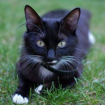 Duman Catstagram Cat Kedicik