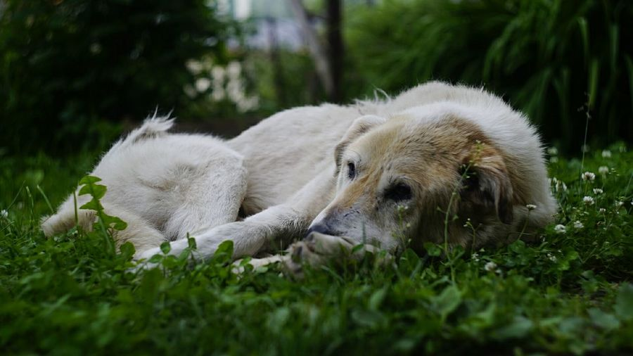 Dog in a grass