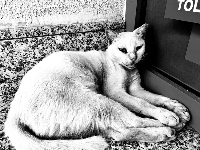 Domestic Cat One Animal Pets Animal Themes Domestic Animals Mammal Feline Sitting No People Indoors  Day Portrait Close-up The Great Outdoors - 2017 EyeEm Awards Selective Focus Outdoors Focus On Foreground The Street Photographer - 2017 EyeEm Awards The Photojournalist - 2017 EyeEm Awards Animal Wildlife Animals In The Wild Wildlife White Color The Photojournalist - 2017 EyeEm Awards EyeEmNewHere