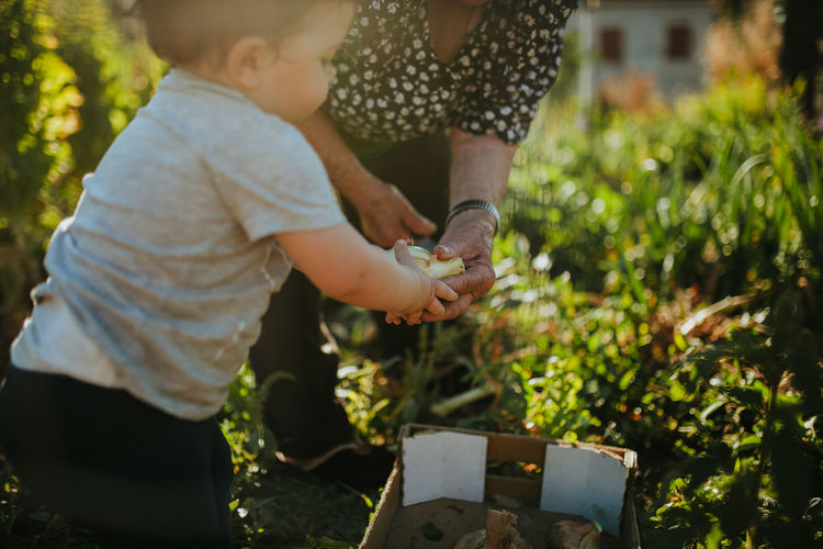 Low section of woman with granddaughter harvesting vegetable in yard