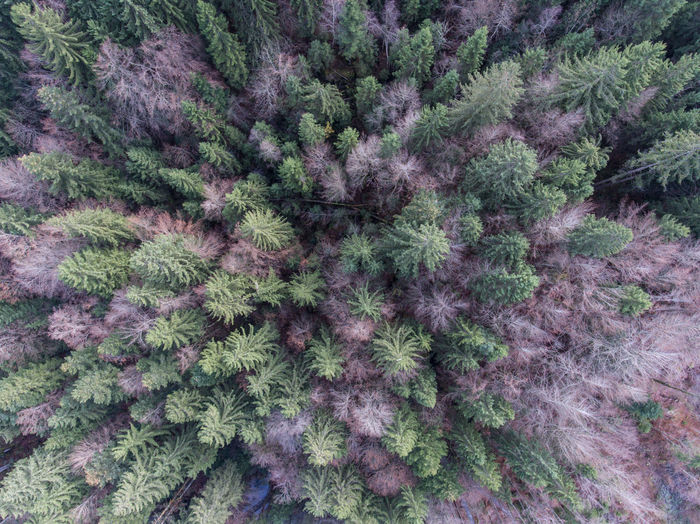 Forest Aerial View Autumn Backgrounds Beauty In Nature Cold Temperature Dji Drone  No People Outdoors Plant Tree