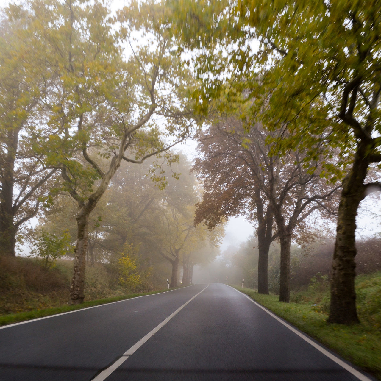 the way forward, tree, road, diminishing perspective, transportation, road marking, nature, white line, day, outdoors, no people, tranquility, dividing line, tranquil scene, scenics, branch, beauty in nature, sky