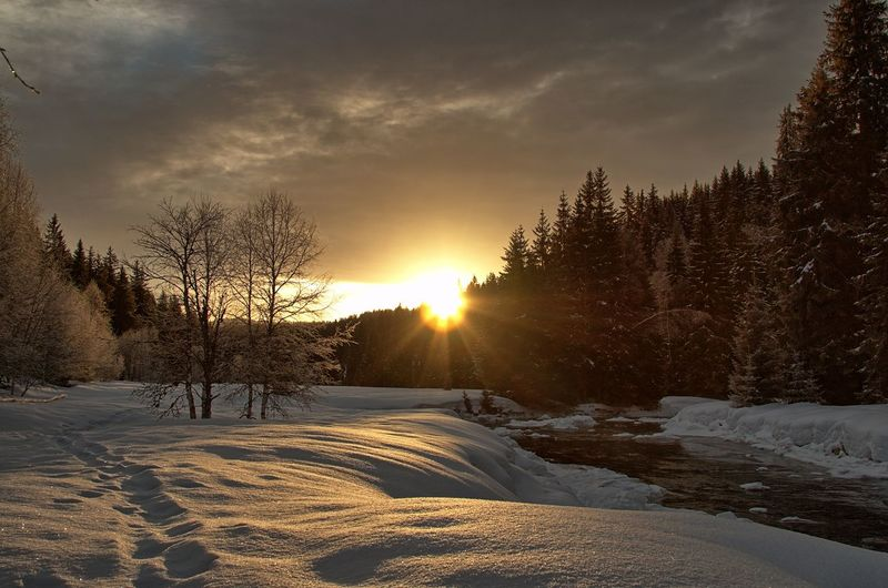 Czech Republic Modrava Sunlight Winter In Šumava Beauty In Nature Cold Temperature Day Landscape Nature No People Outdoors River In Winter Scenics Sky Snow Sun Sunlight Sunset Tranquil Scene Tranquility Tree Weather Winter Šumava Šumava Bohemia EyeEmNewHere