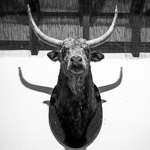 Low angle view hunting trophy mounted on wall