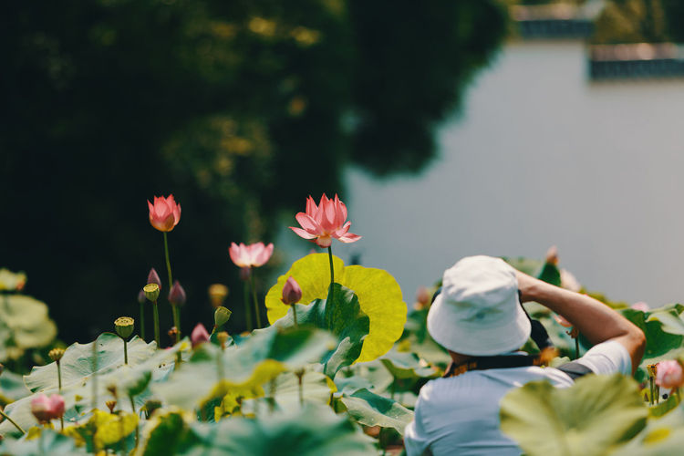 Rear view of a man photographing water lilies