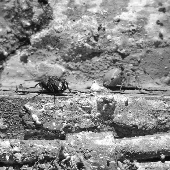 Huawei P9 Photos Huaweiphotography HuaweiP9Photography HuaweiP9 Huaweip9photos Huawei P9 Leica Huawei P9. Insect Spider Blackandwhite Black And White